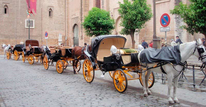 carriage horses in Seville