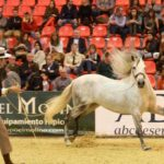 International Exhibition of Horses SICAB