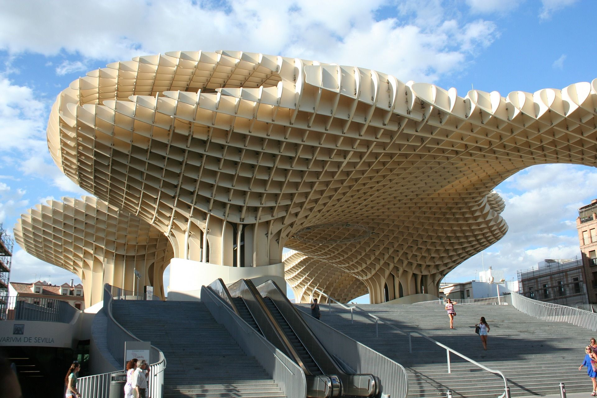 What you need to know before you go to see the Mushrooms of Seville