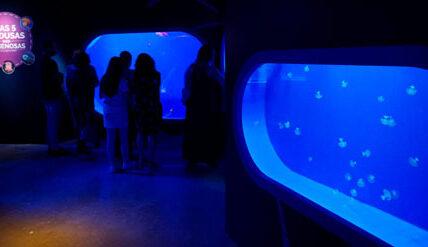 Get to know the Seville Aquarium