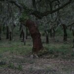 Typical trees of Seville - Experiences and essences of Seville